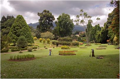 Sarnacki Com Peradeniya Botanical Gardens Sri Lanka 169 2006